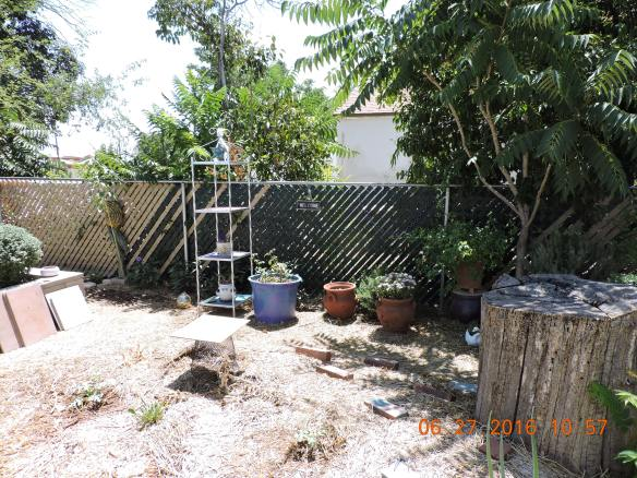 Etagere moved to the container area of the East pathway offering some shade to cucumbers struggling in that fence spot.