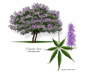 fb.chastetree