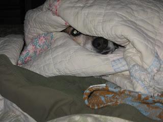 Stevie in her quilt