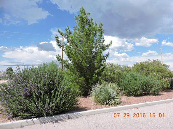 Beautiful desert diversity