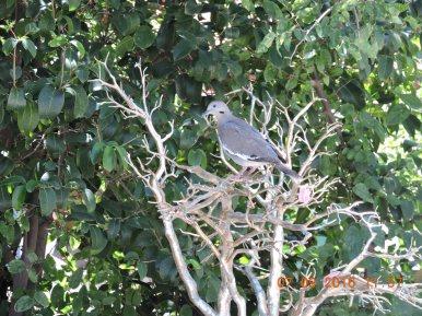Lovey Dovey likes the fake tree