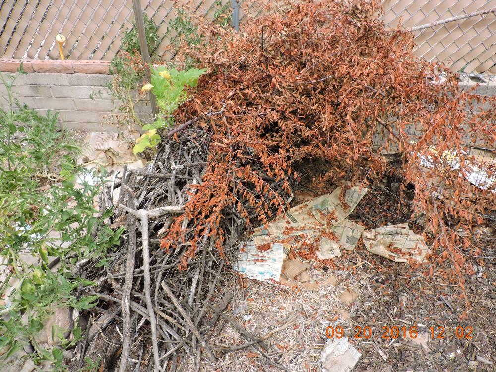 Pyracantha trimmings from a recent culling in the #ParkwayProject