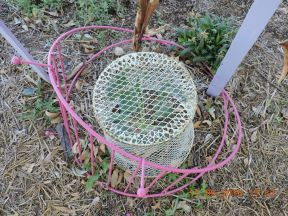 White butterfly thwarting wire trash can