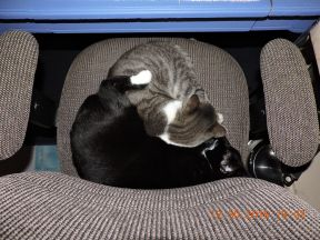 Lucy and Mickey Mouser seldom apart