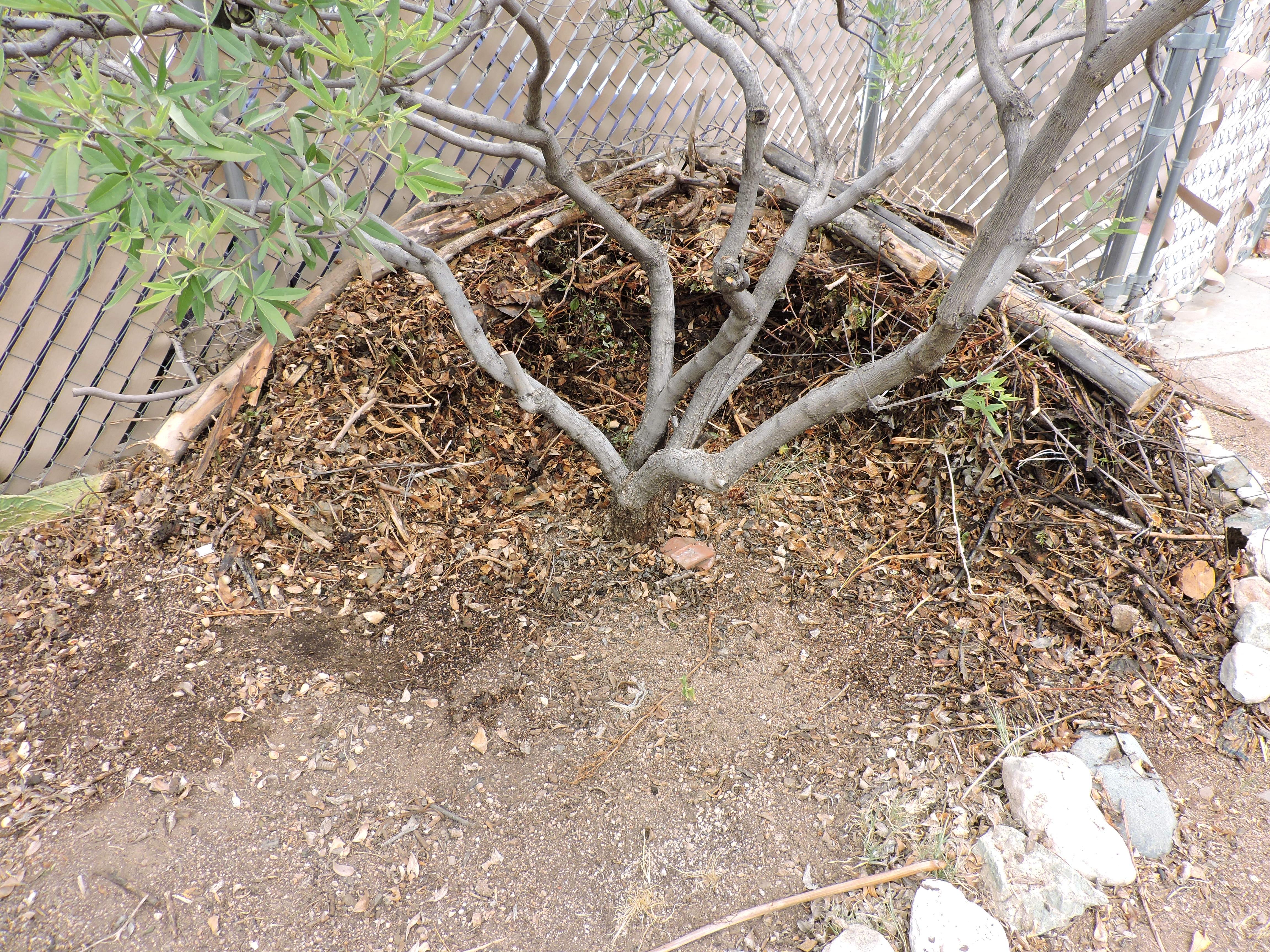 above ground mound